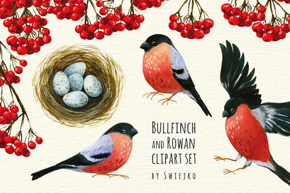Bullfinch And Rowan Clipart Set by Swiejko is available from CreativeMarket for $7.