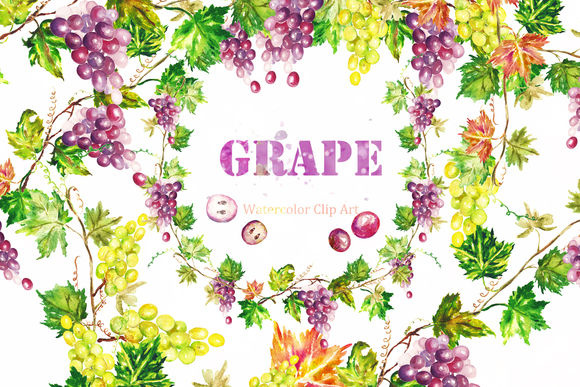 Grape Watercolor Clip Art by LABFcreations is available from CreativeMarket for $8.