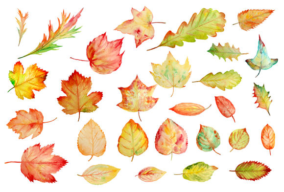 Watercolor Autumn Leaves Clipart by CornerCroft is available from CreativeMarket for $6.