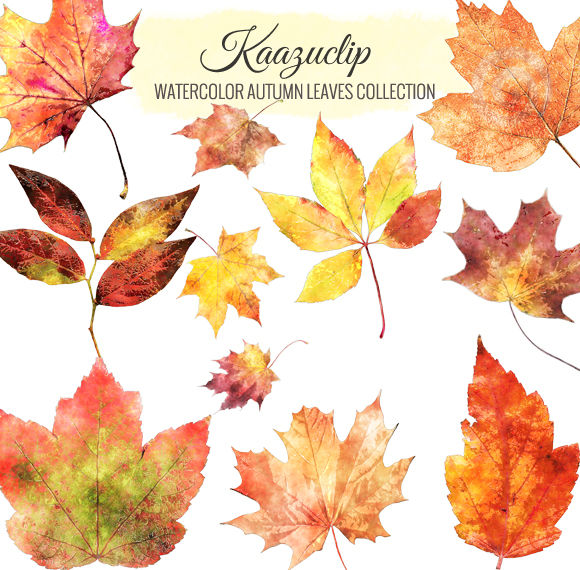 Watercolor Autumn Leaves Collection by Kaazuclip is available from CreativeMarket for $5.