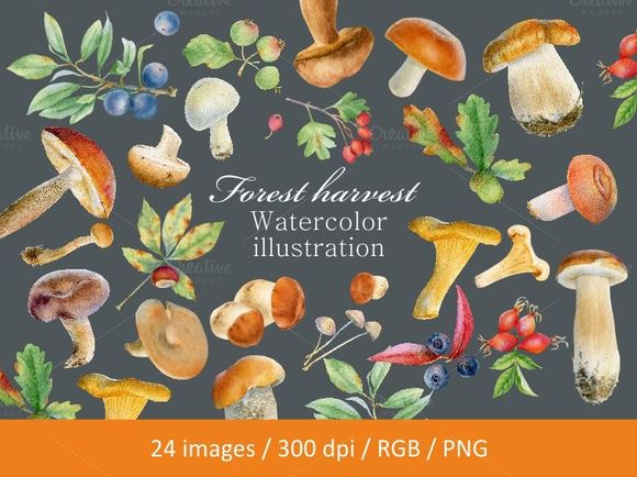 Watercolor Forest Harvest by SvetlanaBakaldina is available from CreativeMarket for $15.