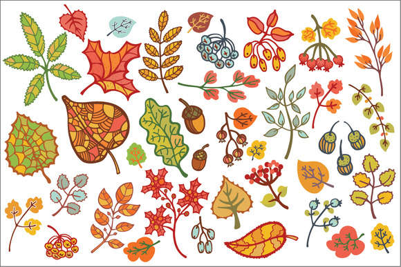 Autumn leaves set. Vector Clipart