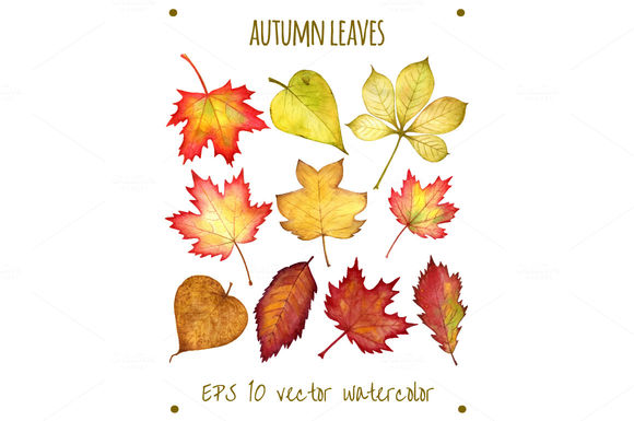 Autumn Leaves by Chereshenka is available from CreativeMarket for $6.