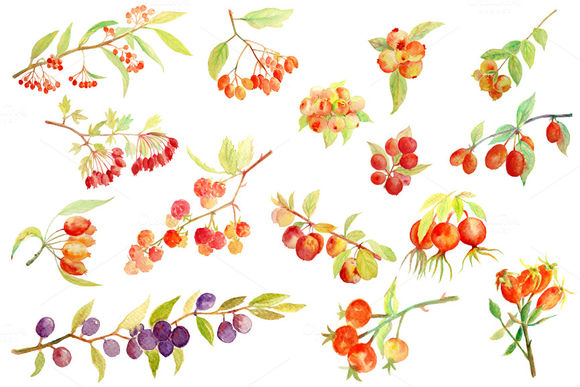 Watercolor Autumn Berry Fall Berry by CornerCroft is available from CreativeMarket for $5.