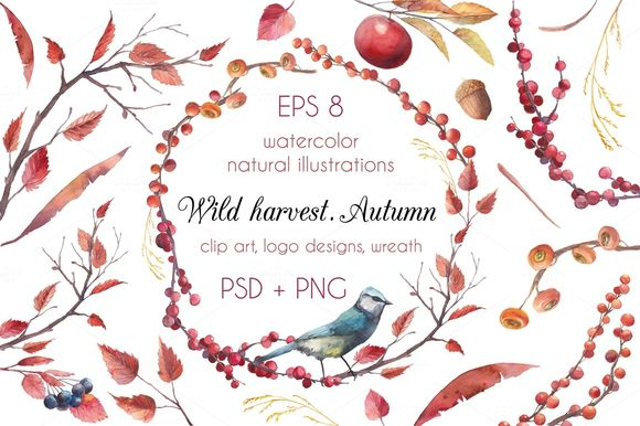 Wild Harvest by Eisfrei is available from CreativeMarket for $12.