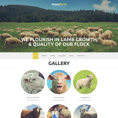 Sheep Farm Joomla Template (Joomla theme for agriculture and farms) Item Picture